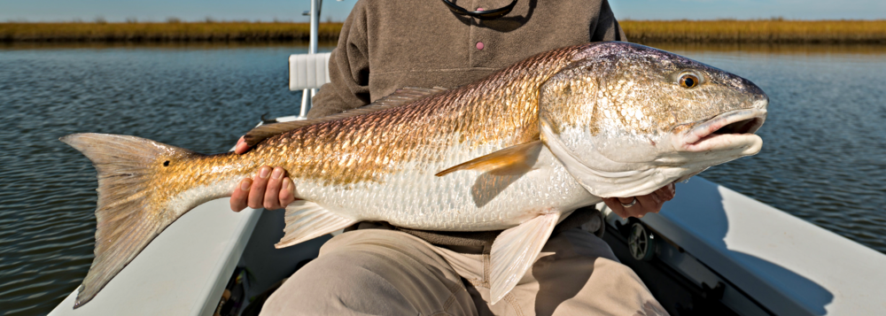 fly-Fishing-New-Orleans-Louisiana-Marsh-Bull-Redfish-1