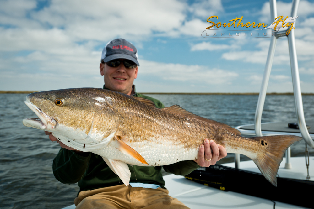 Southern fly expeditions the best time to fish louisiana for Louisiana redfish fly fishing