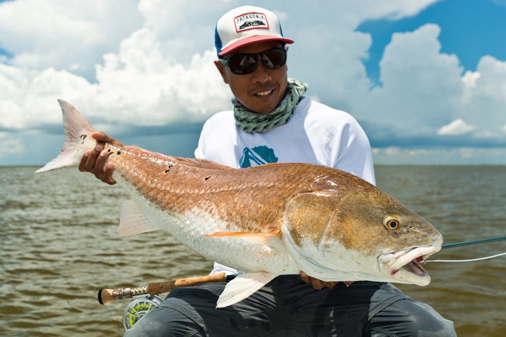 Image gallery louisiana redfish for Fly fishing redfish