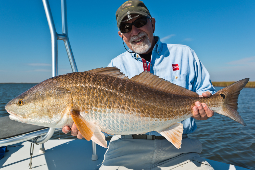Bull Red Photos Fly Fishing with Southern Fly Expeditions