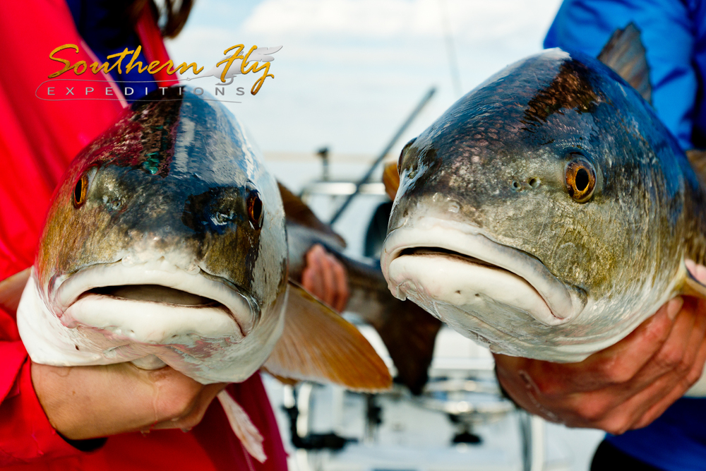 Photos of Redfish January 2015 with Southern Fly Expeditions of New Orleans