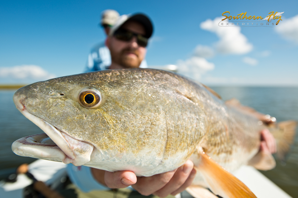 Redfish Fishing Charter
