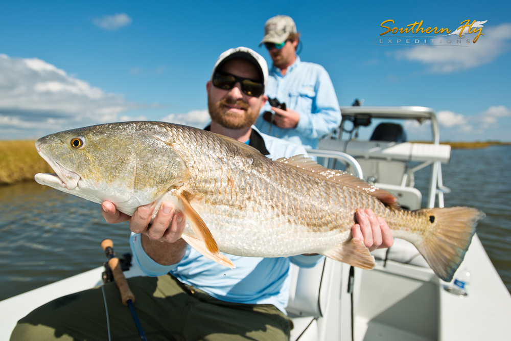 Louisiana Marsh Fly Fishing Red Drum