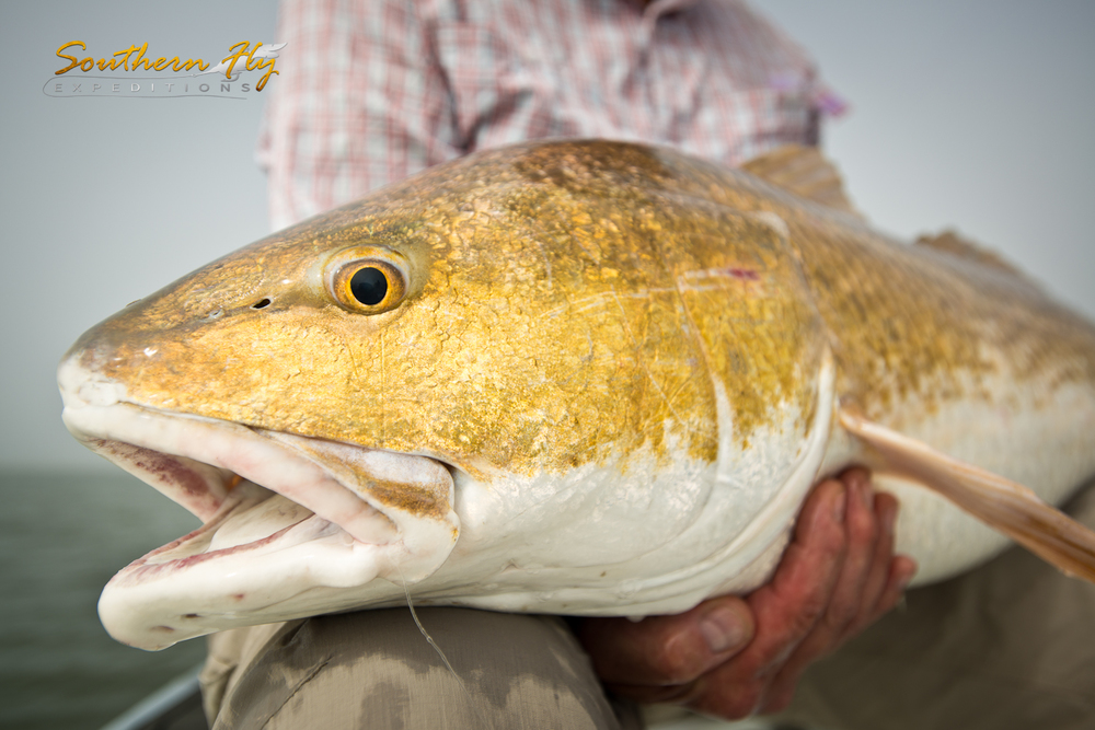 Red Fish Fishing Guide - Captain Brandon Keck