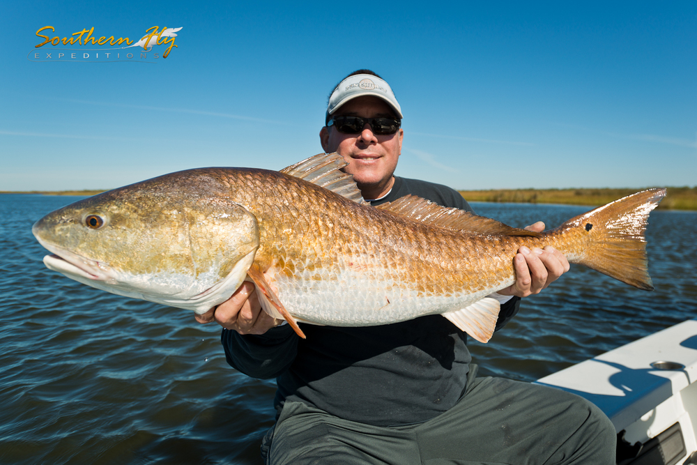 Trophy Sized Red Drum