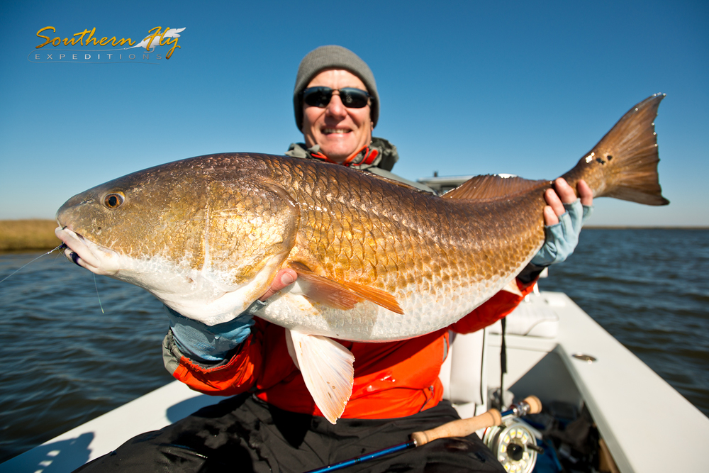 Prize Catch Huge Red Drum