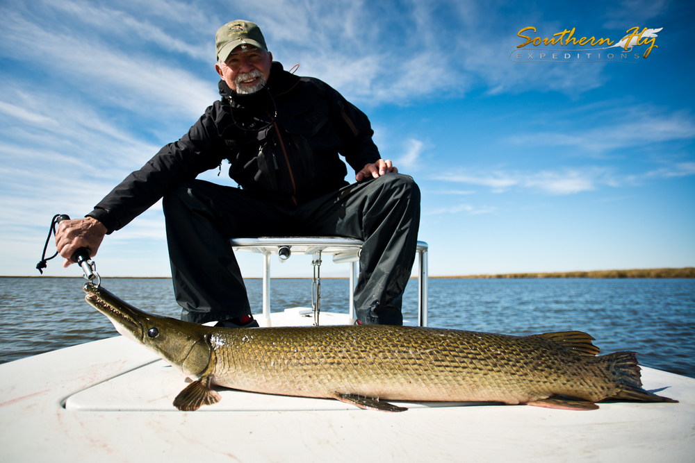 Long Nose Gar Caught in Saltwaters