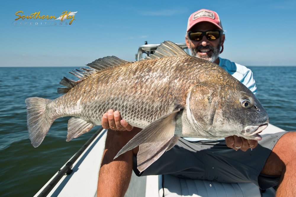 Louisiana black drum on fly