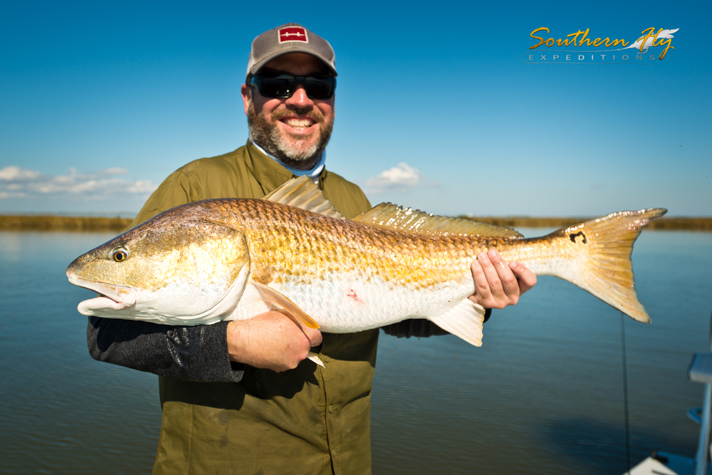 Louisiana bull redfish on fly