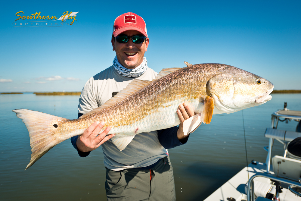 Redfish on fly in Louisiana