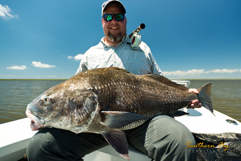 Black drum on fly in Louisiana