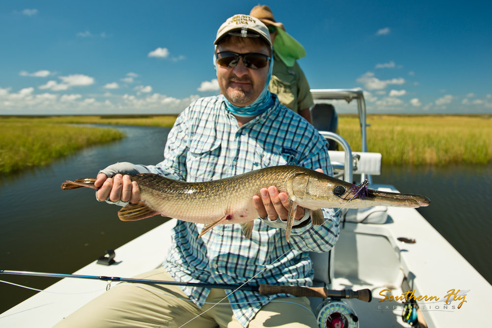 Southern Louisiana Shallow Water Alligator Gar