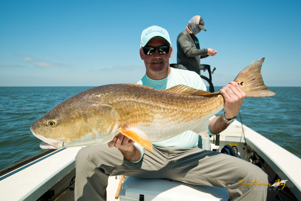 fly fishing guide new orleans louisiana huge redfish on fly with Southern Fly Expeditions