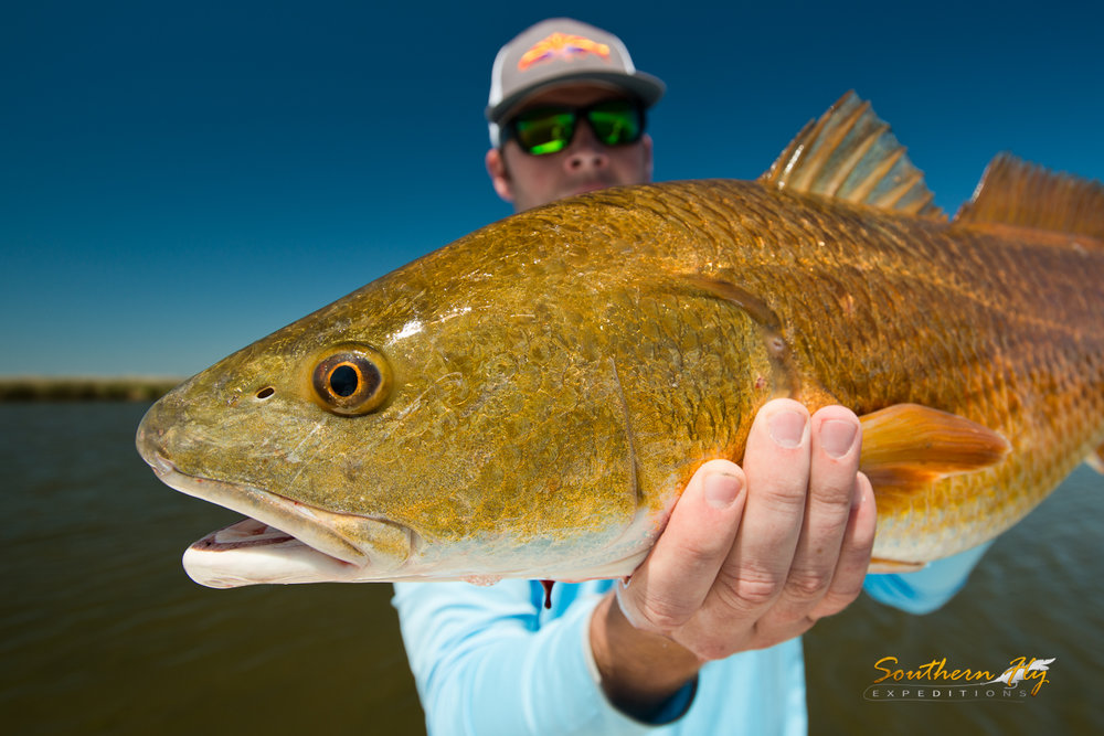 California Anglers Fly Cast New Orleans