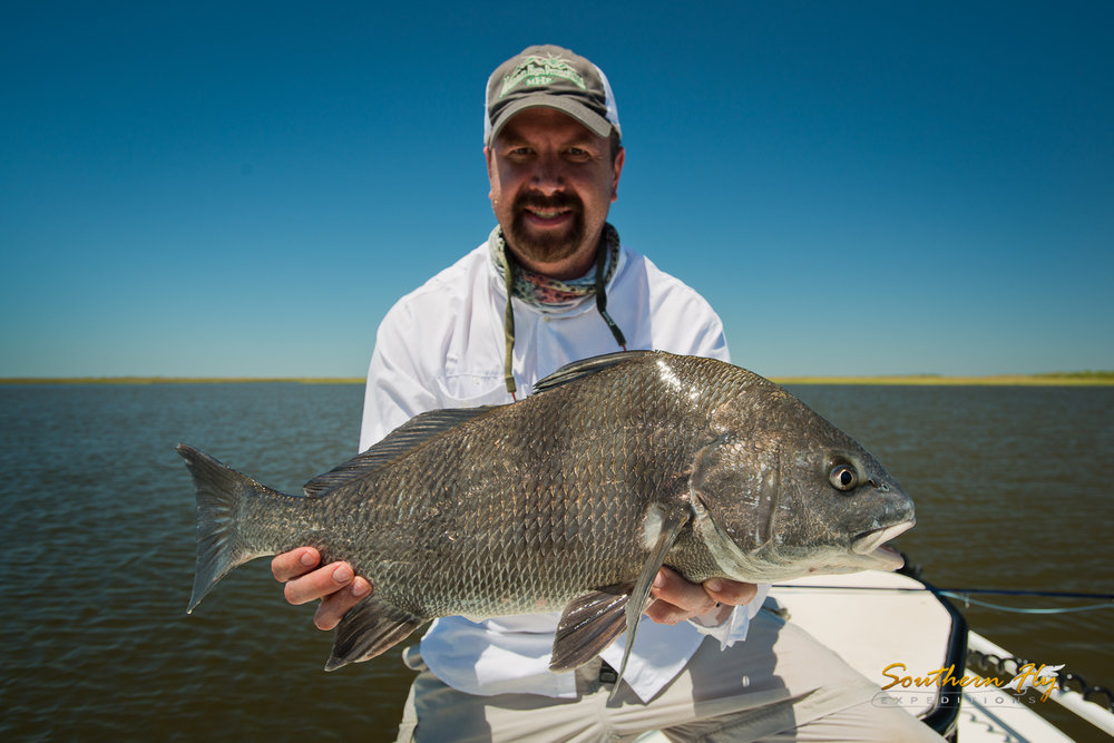 Black Drum fishing by Southern Fly Expeditions