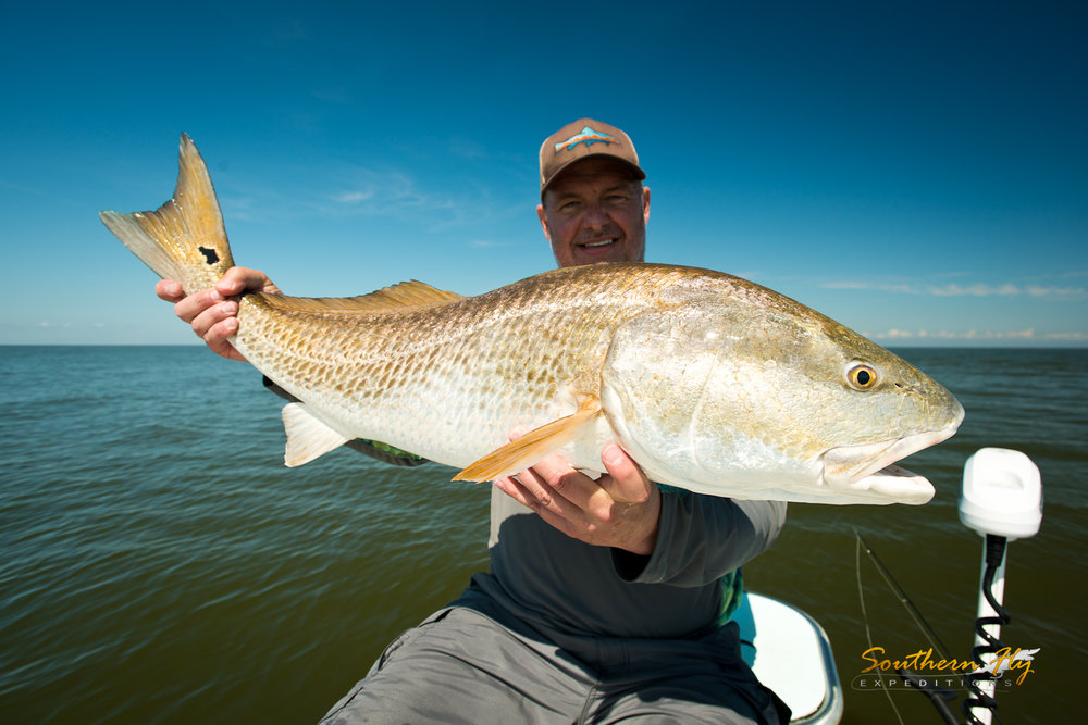 fly fishing redfish guide new orleans louisiana with southern fly expeditions and captain brandon keck