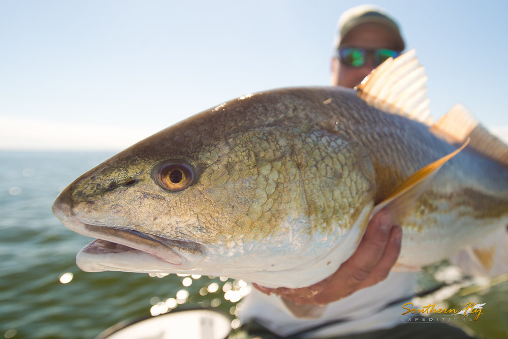 how to catch Giant Redfish in Louisiana with Southern Fly Expeditions