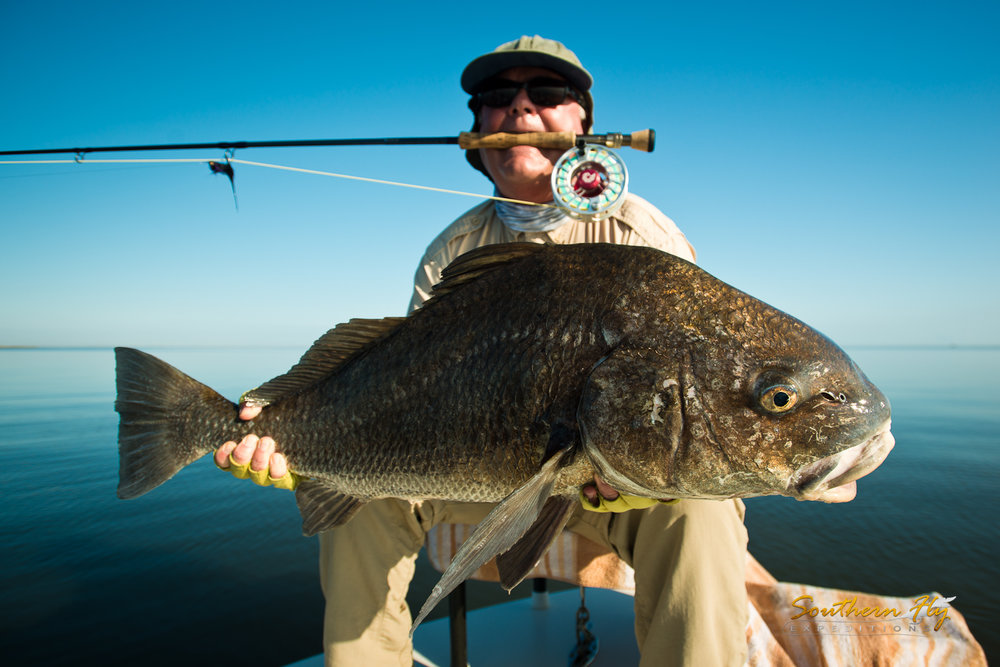 Sight Fishing Black Drum New Orleans Southern Fly Expeditions