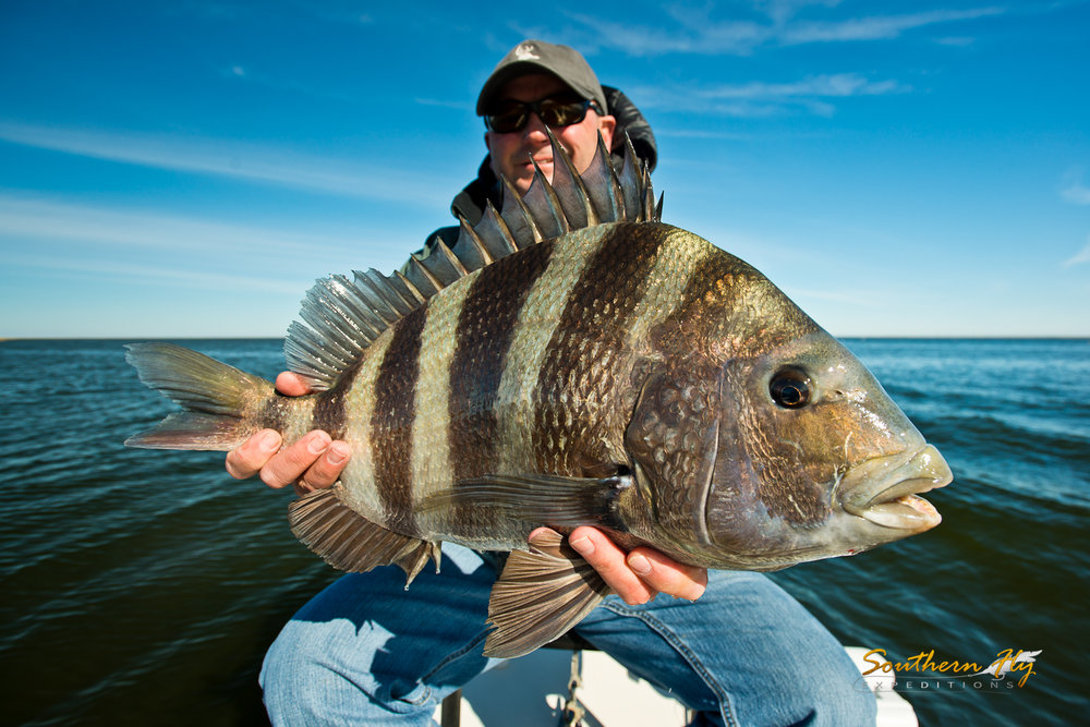 Sheepshead Aligator Gar Monster Red Fish Spin Fishing with Southern Fly Expeditions
