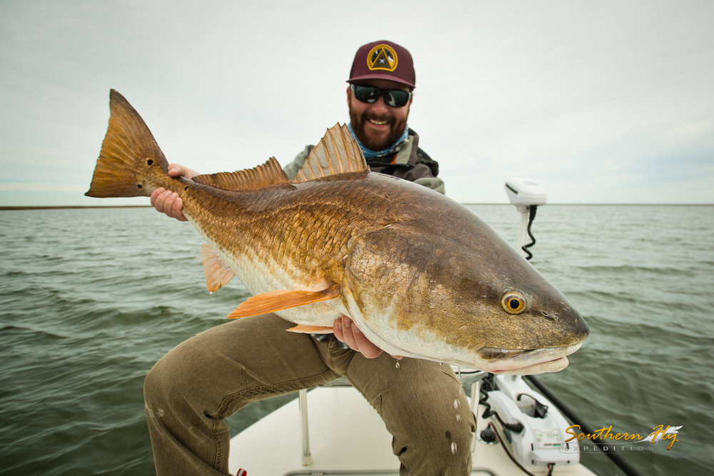 redfish fly fishing new orleans best winter fishing guide southern fly expeditions