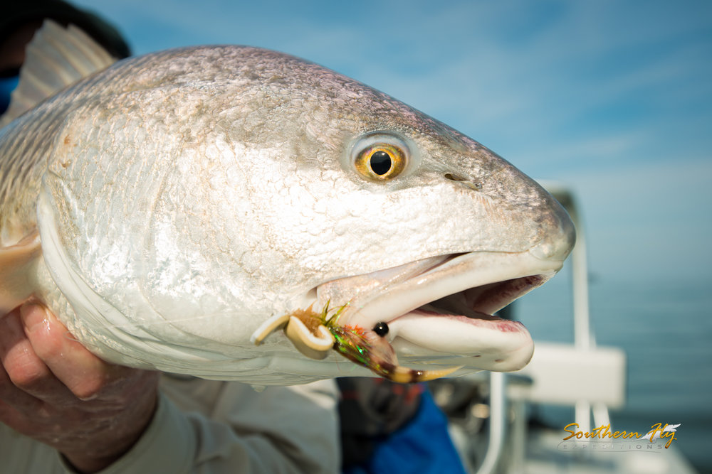 fly fishing guide southern fly expeditions blogpost on when the best time to flyfish in louisiana is