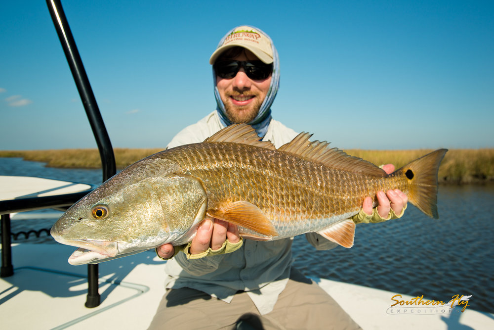 best time to catch redfish in louisiana with southern fly expeditions