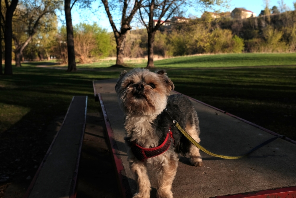 Wally posing at Hidden Falls park on the Mississippi River. Fort Snelling buildings in background.