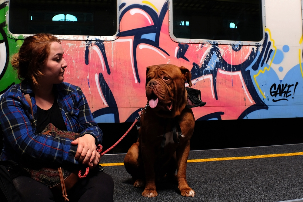 Dogue de Bordeaux and owner at Milano Centrale train terminal
