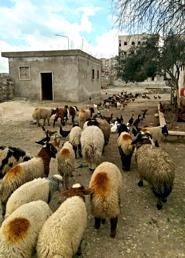 Karam Farm 3.jpg
