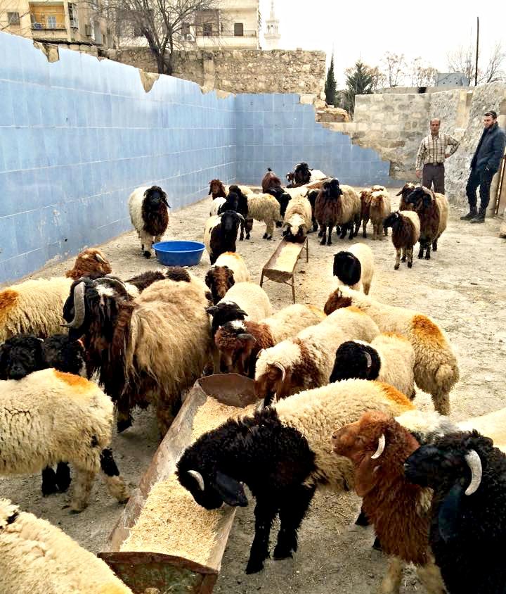 Karam Farm 4.jpg