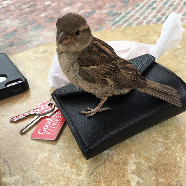 Made a lil friend today at lunch! #toronto #bird
