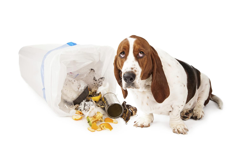 Dog Day Care Beaverton