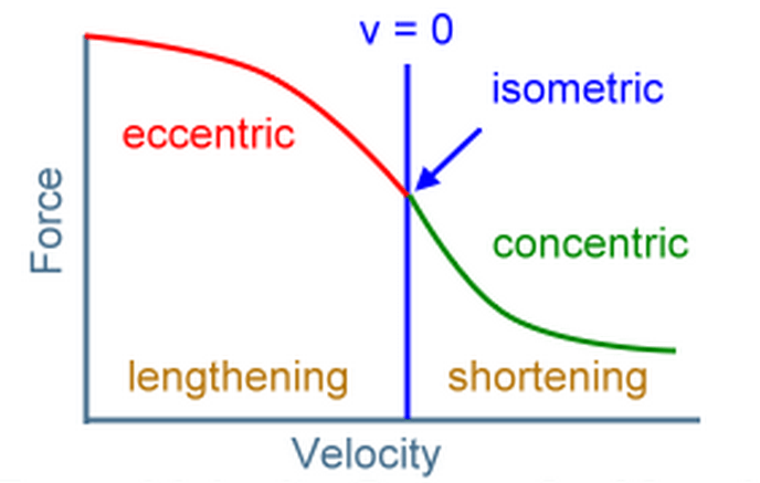 Figure 1 - F-V Curve with Isometric & Eccentric Contractions