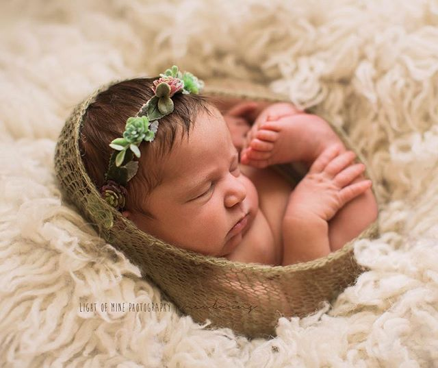 I could have photographed this girl all day! . . . . . . . . . . #newborn #newborngirl #succulents #wrap #newbornphotography #newbornphotographer #syracuseny #cny #newyork #romehospital #cnyphotographer #simple