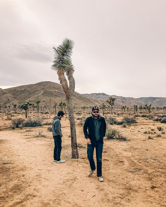 From one desert extreme (Iceland) to another (California). #joshuatree