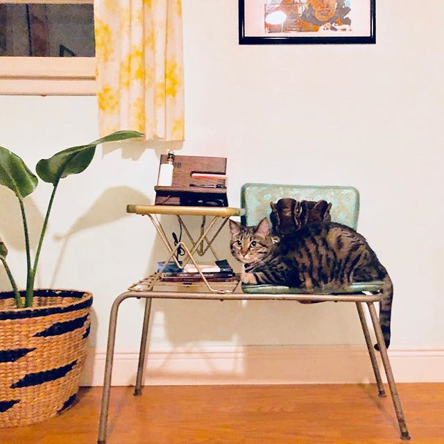 Puss & Boots & a 1960's Telephone Station. #midcenturymodern #sweetfind #evilcat #newboots