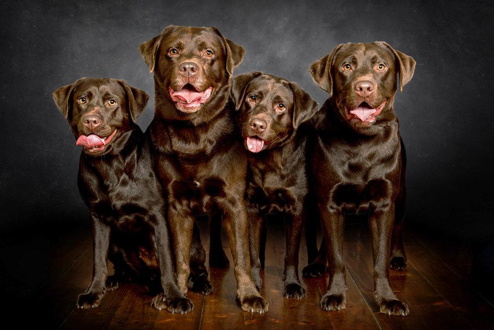 adelaide family children photographer photography_025.jpg