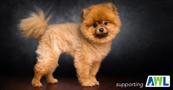 1 fluffy dog photography adelaide sa south australia.jpg
