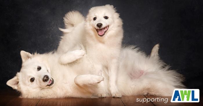 2 fluffy dog photography adelaide sa south australia.jpg
