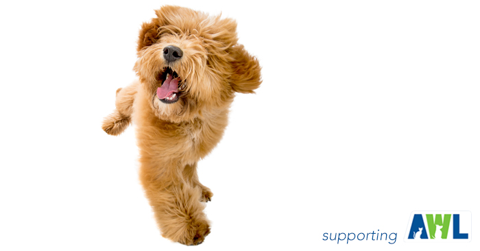 6 fluffy dog photography adelaide sa south australia.jpg