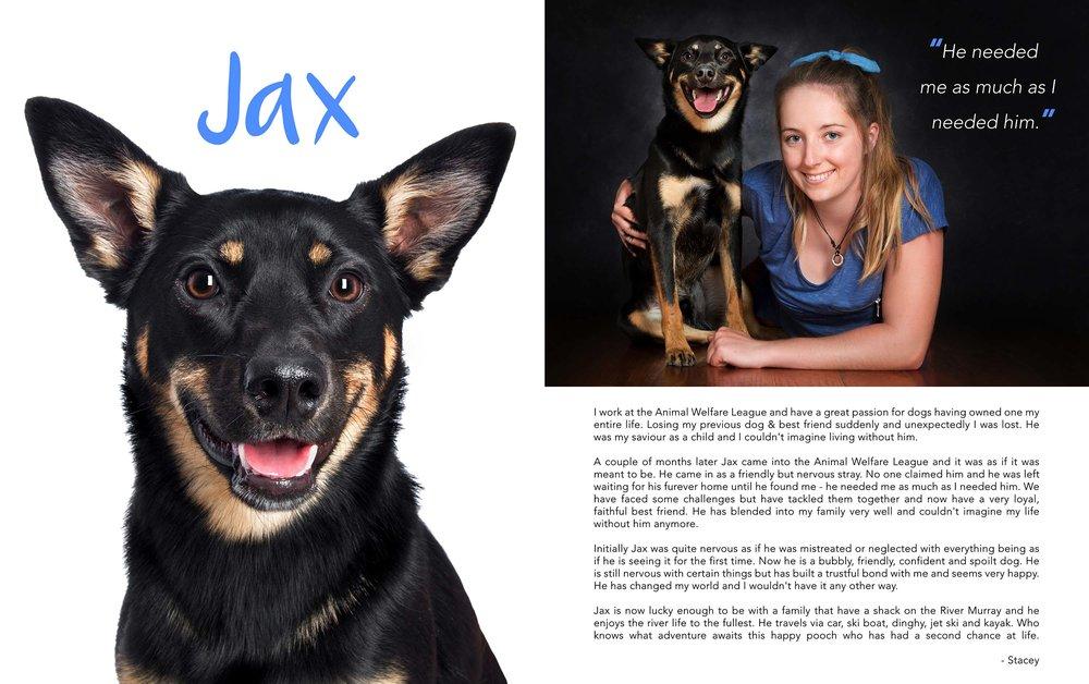 rescue dog dogs puppy adoption awl animal welfare league 3.jpg