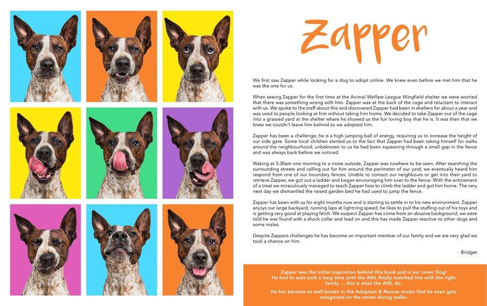 rescue dog dogs puppy adoption awl animal welfare league 2.jpg