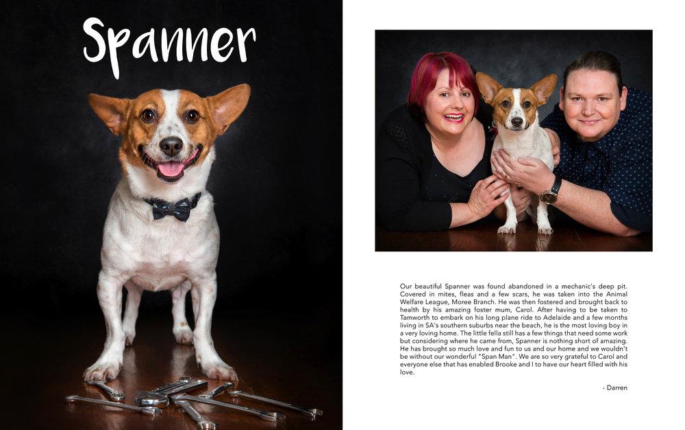 rescue dog dogs puppy adoption awl animal welfare league 1.jpg