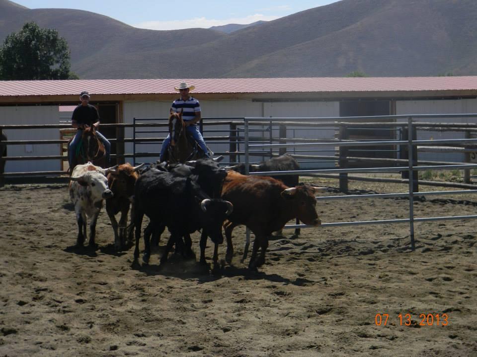 western sorting 3.jpg