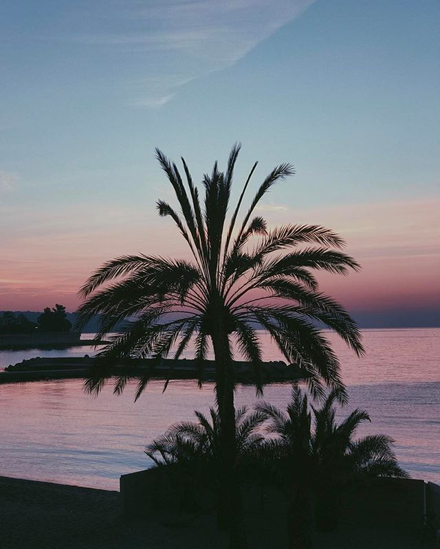 #vscogrid #vscocam #landscape #view #vsco #monaco #sunrise #cotedazur #photography #palm