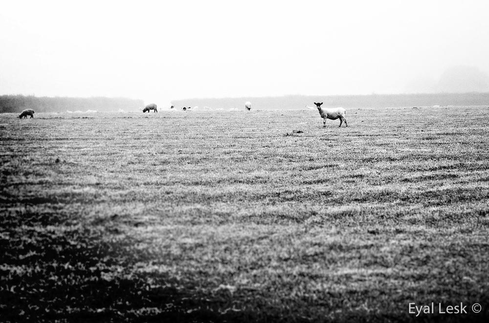 Animal Photography in Devon