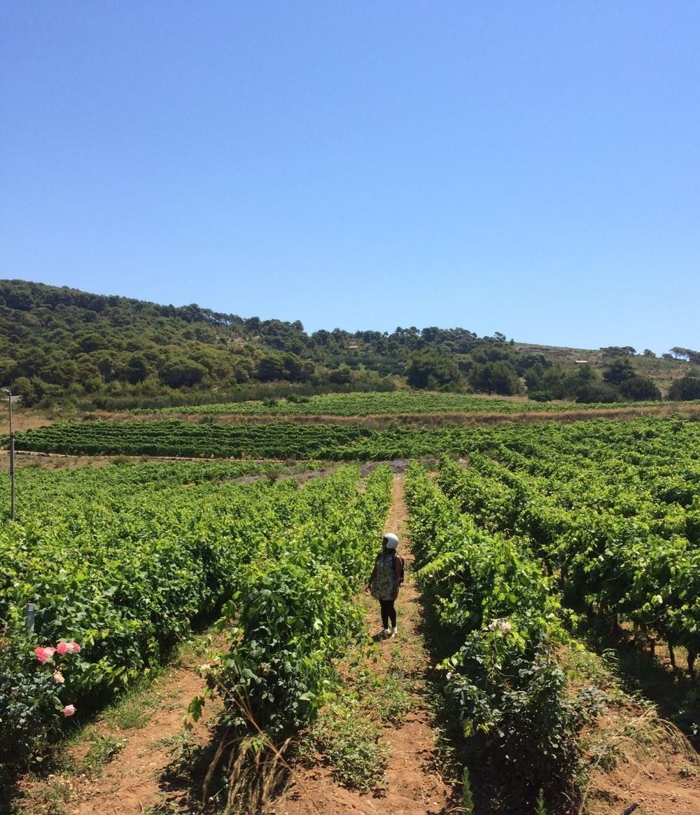 Handful | Vineyard in Vis, Croatia