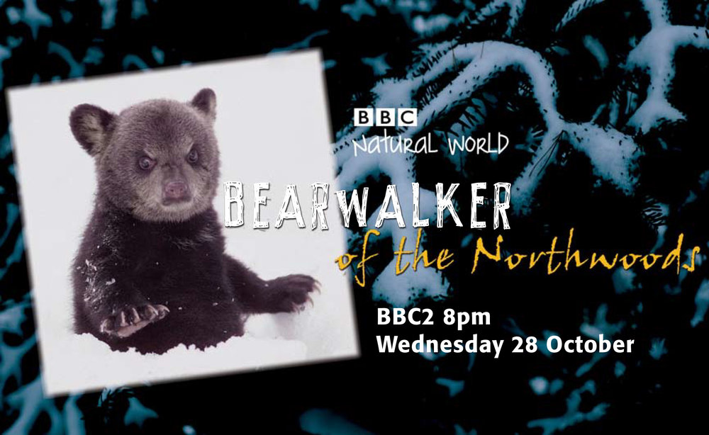 TX card for a 60 minute programme about an amazing Bear biologist in Minnesota who works and walks with black bears.