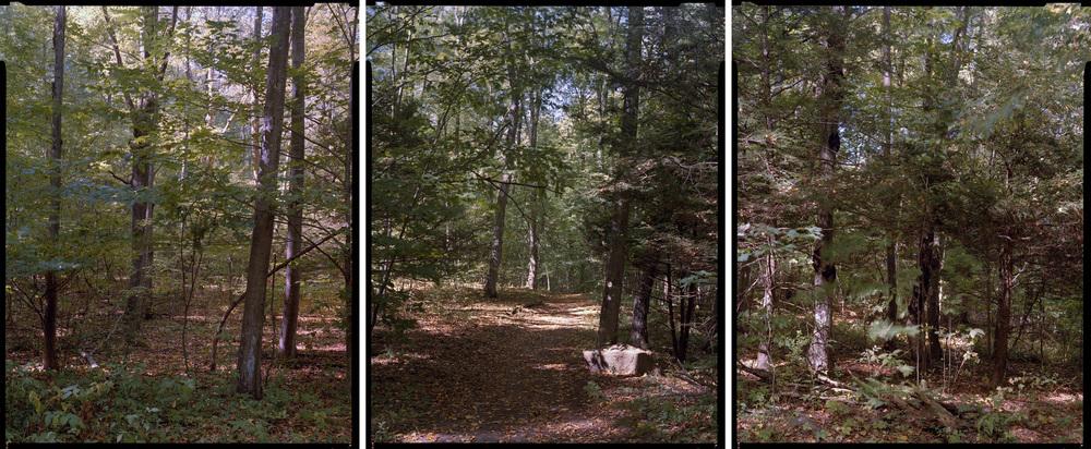 Brooksvale Woods