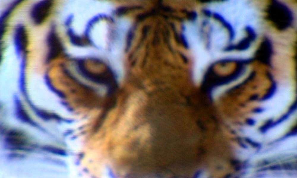 14_Tiger_Eyes-WEB.jpg